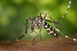Wirksamer Schutz gegen Mücken im Urlaub
